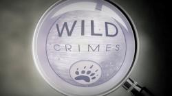 Divoké zločiny