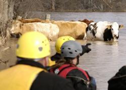 Zvierací záchranári
