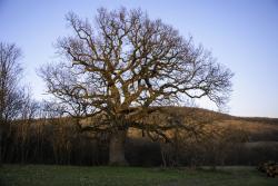 Příběh obrovského stromu
