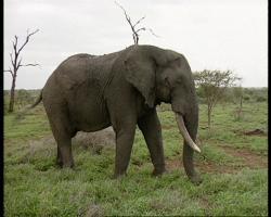 Zoologická v africkém stylu