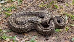 Život hada